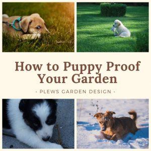 how to puppy proof your garden, dog friendly garden designs, plews
