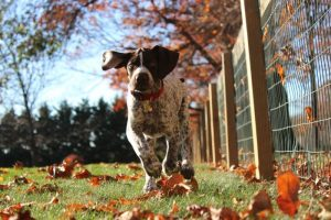Photo by Tim Golder on Unsplash o fhis own pup, puppy running by sturdy garden fence
