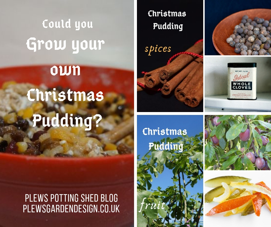grow your own christmas pudding, edible gardens