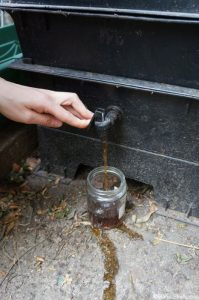 pouring juice from wormery, liquid fertiliser, composting