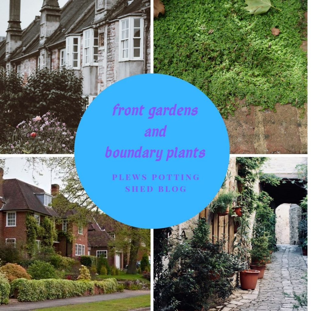 What Makes A Good Boundary Plant Front Garden Planting Ideas