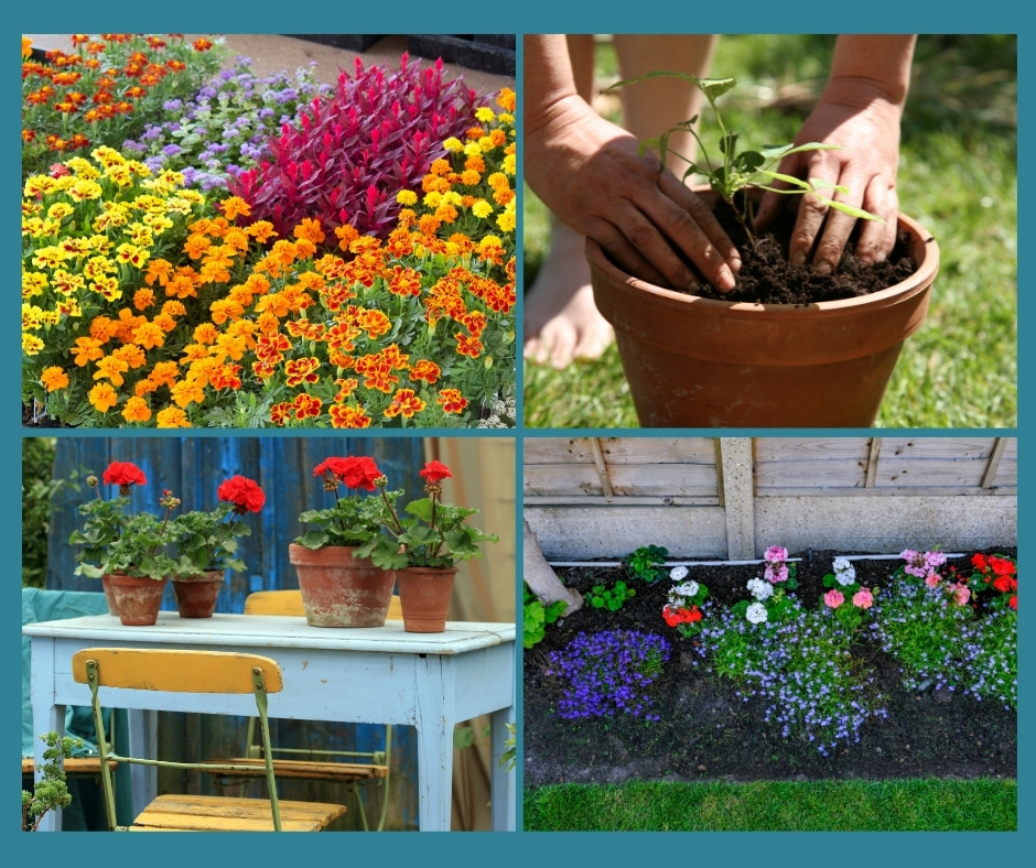 Summer Bedding Plants Questions And, What Is Meant By Bedding Plants